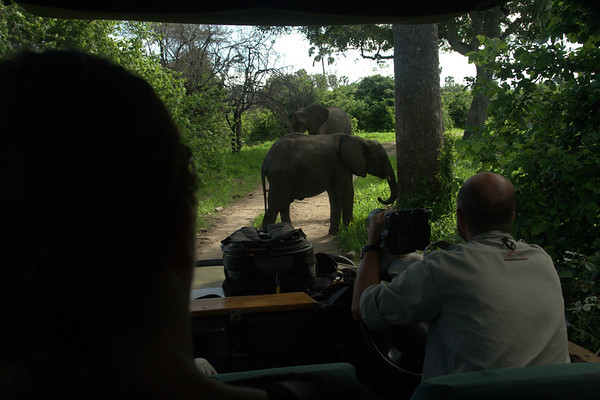 This is How Close: We got to the elephants (Courtney in the foreground)